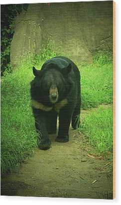 Bear On The Prowl Wood Print