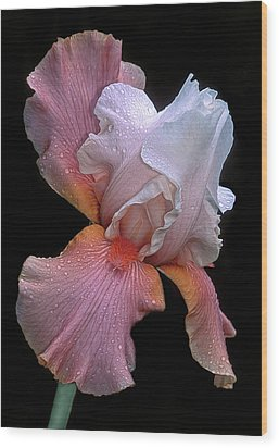 Bearded Iris Wood Print by Dave Mills