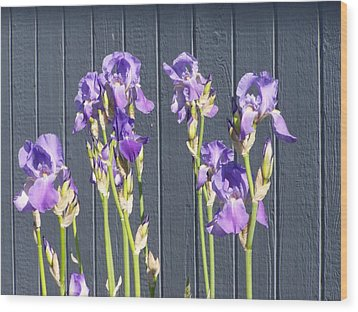 Bearded Iris  Wood Print by Laurie Kidd