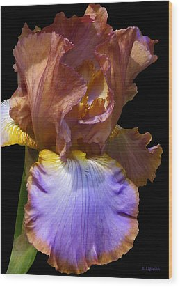 Wood Print featuring the photograph Bearded Iris With Black Background by Kerri Ligatich