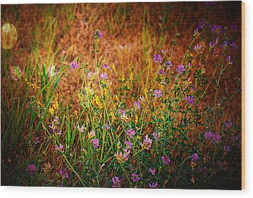 Beautiful And Wild Flowers Wood Print