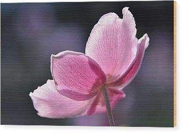 beautiful Anemone Wood Print