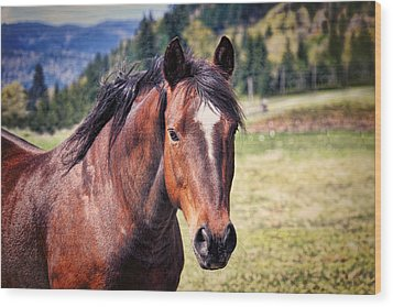 Beautiful Bay Horse In Pasture Wood Print by Tracie Kaska