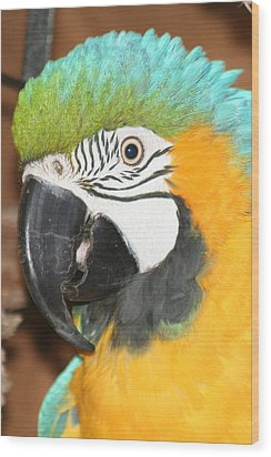 Wood Print featuring the photograph Beautiful Bird by Diane Merkle