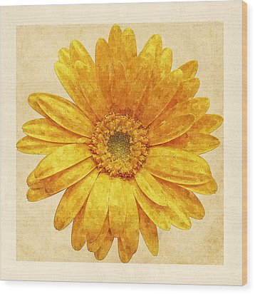 Beautiful Blossom Wood Print
