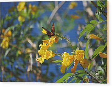 Wood Print featuring the photograph Beautiful Butterfly by Donna Greene