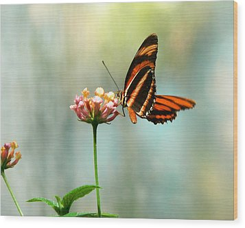 Beautiful Butterfly Wood Print by Laurel Powell