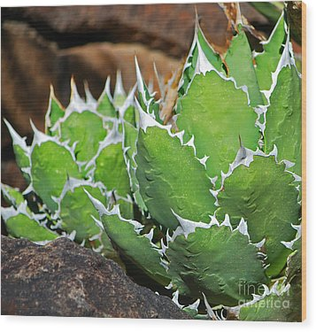 Wood Print featuring the photograph Beautiful Cactus by Donna Greene