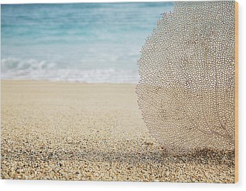 Beautiful Coral Element 1 Wood Print by Brandon Tabiolo - Printscapes