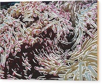 Beautiful Coral Reef  1 Wood Print by Lanjee Chee