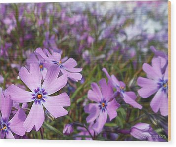 Beautiful Creeping Purple Phlox Wood Print