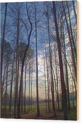 Beautiful Day Wood Print by Beverly Hammond