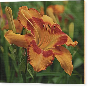 Wood Print featuring the photograph Beautiful Daylily by Sandy Keeton