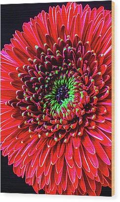 Beautiful Details Of Gerbera Daisy Wood Print by Garry Gay
