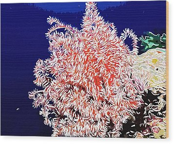 Beautiful Fan Coral Wood Print by Lanjee Chee
