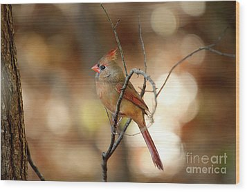 Wood Print featuring the photograph Beautiful Female Cardinal by Darren Fisher