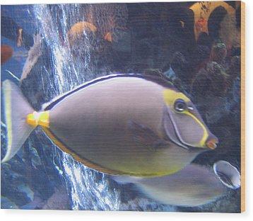 Wood Print featuring the photograph Beautiful Fish by Suhas Tavkar