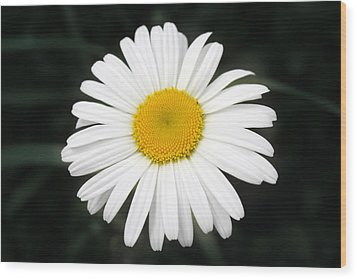 Wood Print featuring the photograph Beautiful Flower by Milena Ilieva