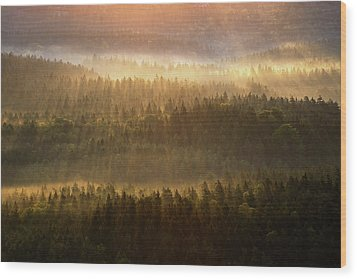 Beautiful Foggy Forest During Autumn Sunrise, Saxon Switzerland, Germany Wood Print