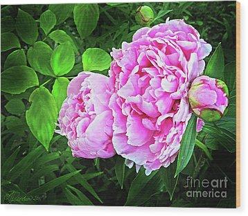 Beautiful Garden Peony Wood Print by Patricia L Davidson