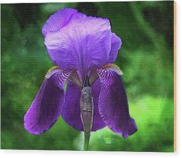 Beautiful Iris With Texture Wood Print by Trina Ansel