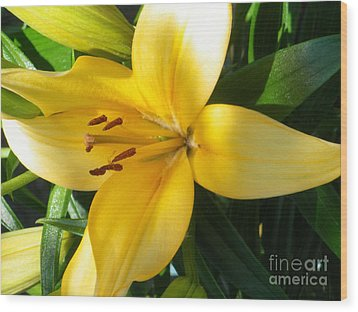 Beautiful Lily I Wood Print by Sonya Chalmers