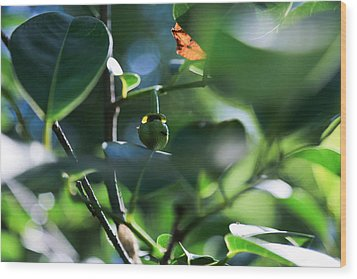 Beautiful Nature Wood Print by Christopher L Thomley