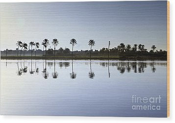 Beautiful Nature In Morning - Egypt. Wood Print by Mohamed Elkhamisy