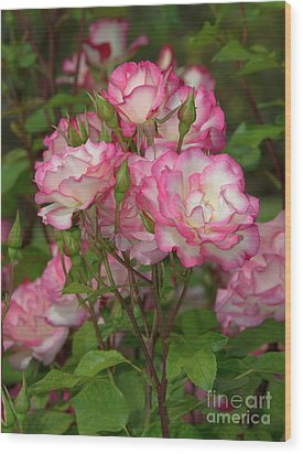 Beautiful Nicole Roses Lighter Wood Print