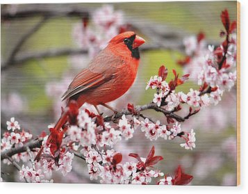 Beautiful Northern Cardinal Wood Print