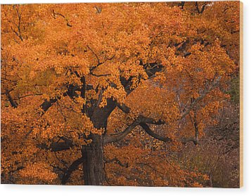 Beautiful Orange Tree On A Fall Day Wood Print