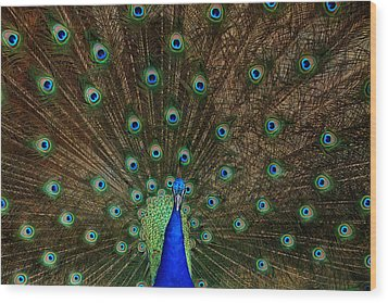 Beautiful Peacock Wood Print by Larry Marshall
