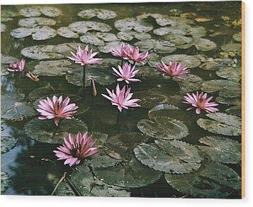 Beautiful Pink Lotus Water Lilies Bloom Wood Print by W. Robert Moore