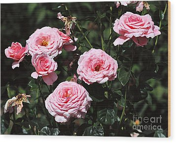 Beautiful Pink Rose L'aimant Wood Print by Louise Heusinkveld