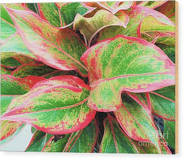 Wood Print featuring the photograph Beautiful Red Aglaonema by Ray Shrewsberry