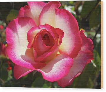 Beautiful Rose Wood Print by Robert Shard