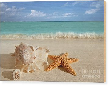 Beautiful Shell On Sand Wood Print by Boon Mee