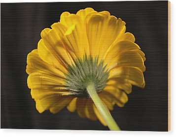 Wood Print featuring the photograph Beautiful Underside by Jeff Swan