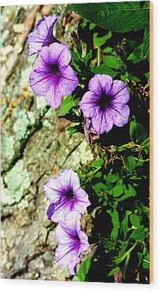 Beautiful Violets Wood Print
