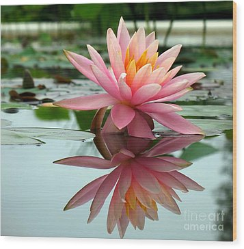 Beautiful Water Lily In A Pond Wood Print by Yali Shi