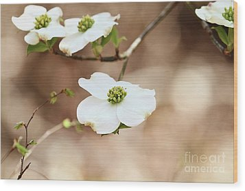 Wood Print featuring the photograph Beautiful White Flowering Dogwood Blossoms by Stephanie Frey