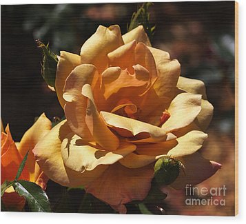 Beautiful Yellow Rose Belle Epoque Wood Print by Louise Heusinkveld