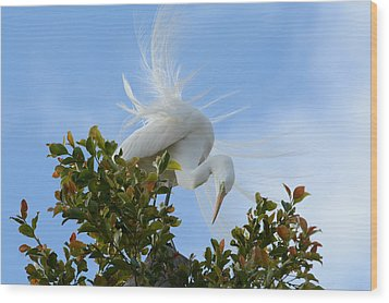 Wood Print featuring the photograph Beauty In The Treetop by Fraida Gutovich