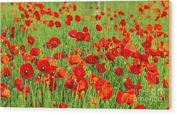 Beauty Red Poppies Wood Print