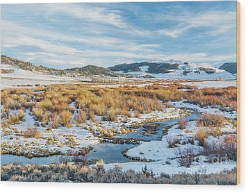 beaver swamp in Rocky Mountains Wood Print