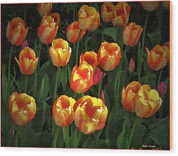 Bed Of Tulips Wood Print by Mikki Cucuzzo