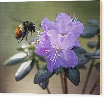 Wood Print featuring the photograph Bee And Bob's Blue by Chris Anderson