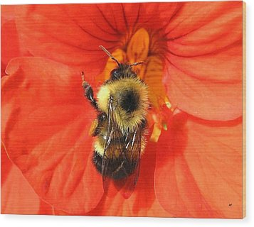 Bee And Nasturtium Wood Print by Will Borden