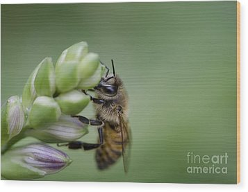 Busy Bee Wood Print by Andrea Silies
