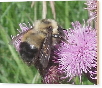Bee Wood Print by Angela Christine